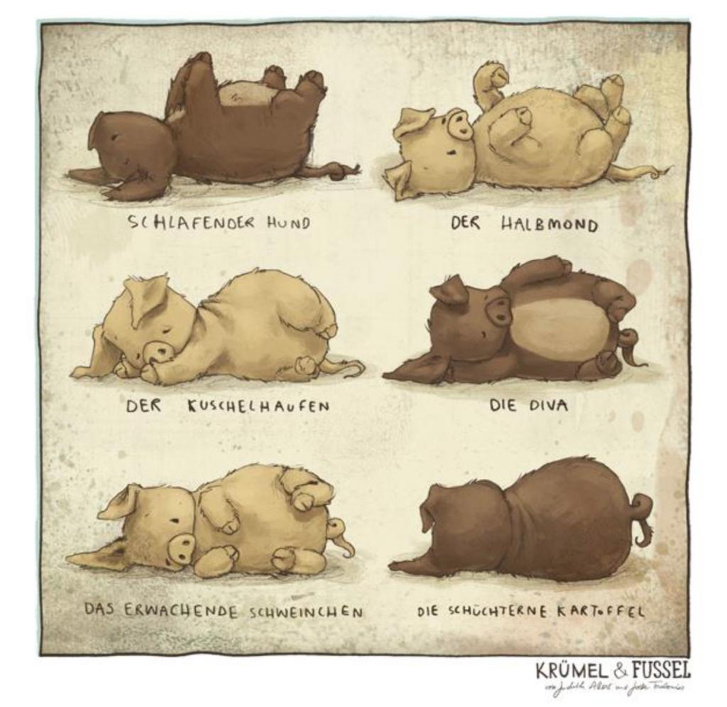 Wollschwein Yoga für Anfänger – Bilder aus dem Buch von Judith Allert